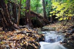 Secuencia del otoño Fotografía de archivo