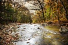 Secuencia del otoño alineada con los árboles foto de archivo libre de regalías