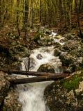 Secuencia en bosque. Árboles caidos. Otoño. Eslovenia Foto de archivo libre de regalías