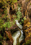 Secuencia en bosque. Árboles caidos. Otoño. Eslovenia Fotos de archivo