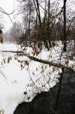 Secuencia en el bosque del invierno imagen de archivo libre de regalías