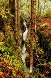 Secuencia en el bosque. Otoño. Eslovenia. Fotos de archivo