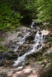 Secuencia encantada del bosque Foto de archivo libre de regalías