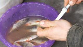 Secuencias del pescador en cierre de los pescados recién pescados de la cuerda encima de la visión metrajes