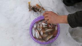 Secuencias del pescador en un pescado recién pescado de la cuerda La pesca del invierno, pescado miente en la nieve metrajes