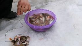 Secuencias del pescador en un pescado recién pescado de la cuerda La pesca del invierno, pescado miente en la nieve almacen de metraje de vídeo
