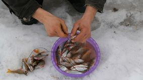 Secuencias del pescador en un pescado reci?n pescado de la cuerda La pesca del invierno, pescado miente en la nieve almacen de metraje de vídeo