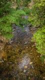 Secuencias en el bosque fotografía de archivo