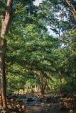 Secuencias en el bosque imagen de archivo libre de regalías