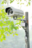 Security camera. Security surveillance camera in the forest royalty free stock images