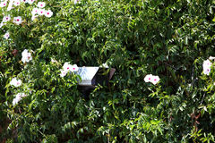 Security camera hidden in greenery Royalty Free Stock Photos
