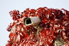 Security camera in read leaves Royalty Free Stock Photo