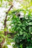 Security Camera in the Shrub, Closeup Stock Image