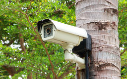 Security camera. Security surveillance camera on coconut tree in park Royalty Free Stock Images