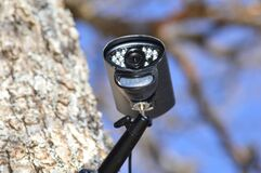 Security camera on a tree with a blurred background