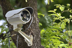 Free Security Camera Video Record System On Tree Royalty Free Stock Image - 91577826