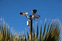 Security cameras, blue sky. And plants stock photography