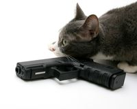 Security Cat Stock Image