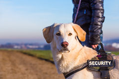 Security dog Stock Photography