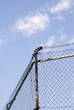 Security fence Stock Photo