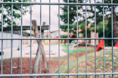 Security fence kindergarten royalty free stock images