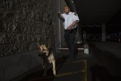 Security Guard In Alleyway Pursuit With Dog. Young mixed race security guard in alleyway pursuit with dog Stock Image