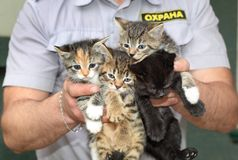 The security guard found small kittens. Royalty Free Stock Photo