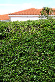 Security Hedge Royalty Free Stock Photos