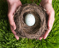 Security Protection - hands holding a nest Royalty Free Stock Photography