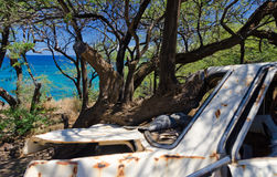 Sedán blanco abandonado en árboles cerca de la playa de Waialea Fotografía de archivo libre de regalías
