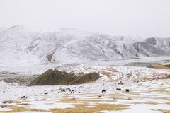 The snow-covered landscape in Buddhist Academy. Larong Wuming Buddhist Academy royalty free stock image