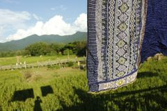 Seda tailandesa en el fondo del arroz Imagen de archivo