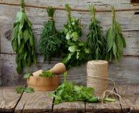 Sedano di montagna aromatico delle erbe, aneto, coriandolo, issopo, salvia Fotografie Stock