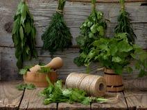 Sedano di montagna aromatico delle erbe, aneto, coriandolo, issopo, salvia Immagini Stock