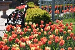 Sedendosi dai tulipani Fotografia Stock Libera da Diritti