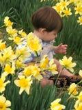 Sedendosi fra i Daffodils Fotografia Stock Libera da Diritti
