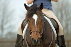 Sedendosi sul cavallo di baia Immagini Stock
