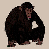 Sedentary young chimpanzees Royalty Free Stock Photo