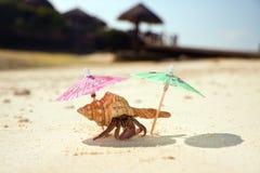 Sedere della spiaggia del granchio dell'eremita Immagine Stock