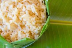 SEDERE riso o riso sbramato germinato di GA Fotografie Stock Libere da Diritti
