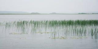 Sedge νερού και επιπλέοντες κρίνοι στη λίμνη Kenozero Στοκ φωτογραφία με δικαίωμα ελεύθερης χρήσης