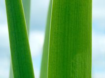 Sedge Stock Images