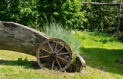 Sedges grow near old wooden carriage wheel Royalty Free Stock Photography