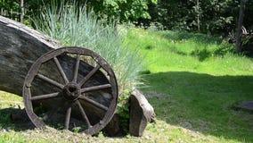Sedges wooden wheel stock video footage