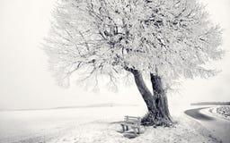 Sedia bianca di giorno dell'albero di inverno Immagini Stock Libere da Diritti