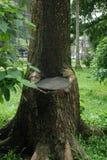 Sedia dell'albero fotografia stock libera da diritti