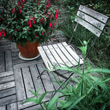 Sedia di legno e fucsia rossa Fotografia Stock