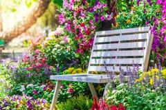 Sedia di legno nel giardino di fiori Fotografia Stock Libera da Diritti