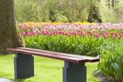 Sedia di legno in un parco colourful del tulipano Fotografia Stock