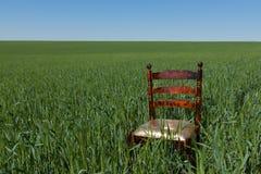Sedia di mogano con un sedile dorato su un giacimento di grano verde immagini stock libere da diritti